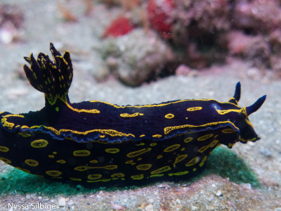 Nudibranch at Gray's Reef National Marine Sanctuary